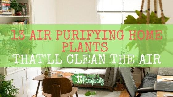 Air purifying houseplants/ indoor plants