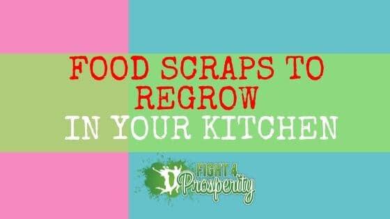 how to regrow food scraps