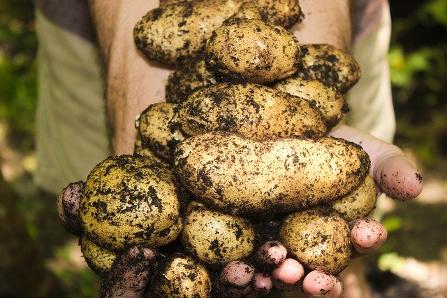 This image has an empty alt attribute; its file name is potatoes-1866415_640.jpg