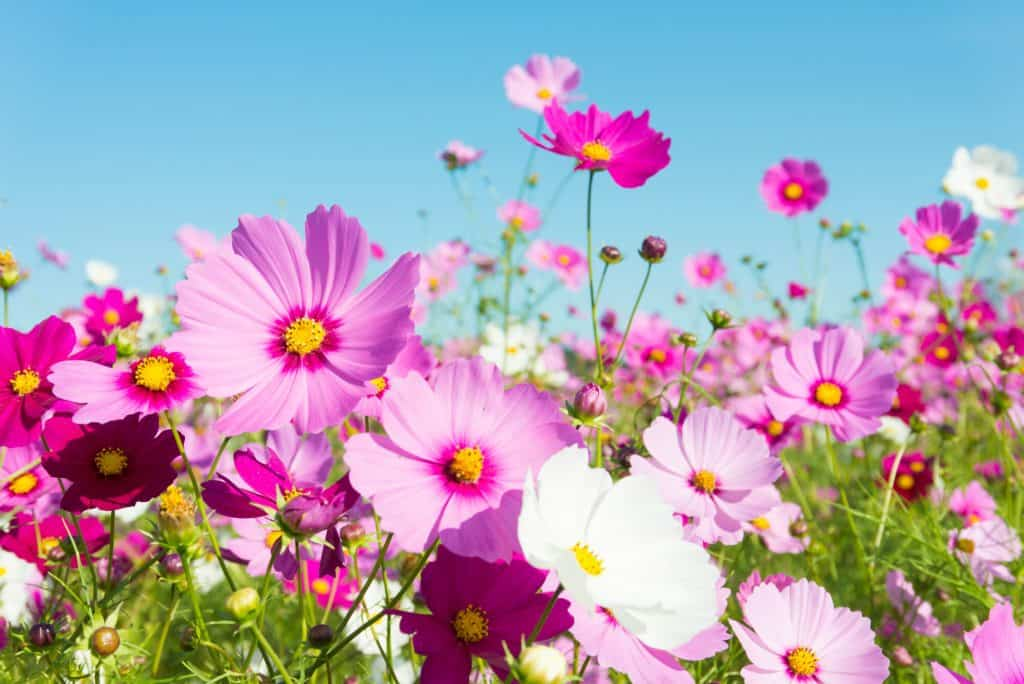 flowers to grow in vegetable garden